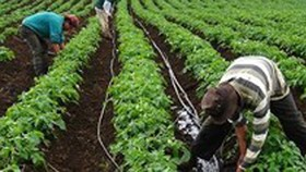 Drip irrigation increases crop productivity