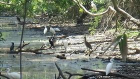 Ca Mau bird garden causes serious pollution