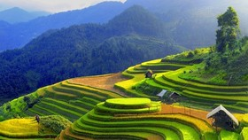 Terraced paddy fields in Mu Cang Chai in Yen Bai Province. (VNS File Photo)