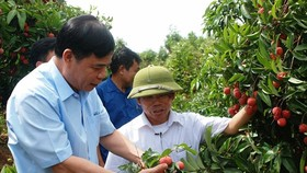 Minister of Agriculture and Rural Development Nguyen Xuan Cuong directly inspects the consumption of lychees