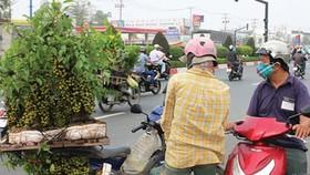 Cẩn trọng khi mua cây kiểng bán dạo
