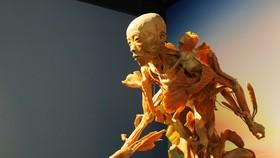 """Tạm ngừng triển lãm """"Sự bí ẩn đặc biệt của cơ thể người"""""""