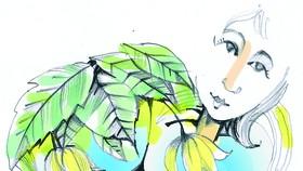 Minh họa: P.S