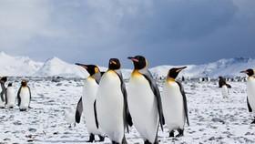 奶奶的夢想是到南極看企鵝。()示意圖源互聯網: