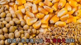 進口的飼料大部分是黃豆、玉米、小麥、木薯及木薯製品。(示意圖源:互聯網)