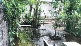 臭氣熏天廢水流入居民住房。