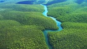 最新報告:自2000年以來,秘魯共損失了200萬公頃的原始森林。圖為亞馬遜熱帶雨林空照一瞥。(圖源:互聯網)