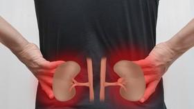 腎好不好就看這9個標準。(示意圖源:互聯網)