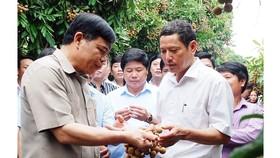 Bộ trưởng Nguyễn Xuân Cường vừa trực tiếp xuống thị sát, nếm thử và đề nghị các địa phương xúc tiến hỗ trợ bà con tiêu thụ với giá tốt