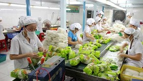 The export value of vegetables and fruits is estimated at US$1.7 billion in the first half of this year, marking a year-on-year increase of 45 percent. (Photo: baodautu.vn)
