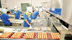 An egg processing plant in HCMC (Photo: SGGP)