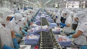 By product: Anh's research opens the door for creating by-products from the aquaculture industry. Vietnam is one of the leading fish exporters in the world. (Photo: VNA/VNS)