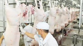 Pork processing under VietGAP quality standard at Vissan Company (Photo: SGGP)