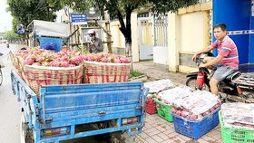 A man transports baskets of dragon fruits for sale to a trader (Photo: SGGP)