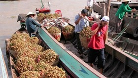 Vegetable and fruit exports were expected to post a growth of 10 percent this year (Photo: vneconomy.vn)