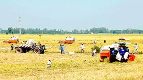 Cánh đồng mẫu lớn là mô hình sản xuất hiện đại giúp doanh nghiệp và nông dân gắn kết.