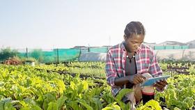 Nông dân châu Phi thời 4.0