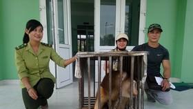 Bàn giao cá thể khỉ đuôi lợn cho Kiểm lâm