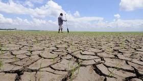 Brazil báo động hạn hán trầm trọng