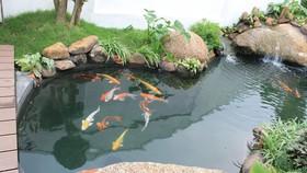 Chọn 4 cơ sở cá cảnh xây dựng mô hình thực hành quản lý tốt