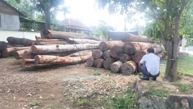 """Hàng trăm khối gỗ lậu của Phượng """"râu"""" bị cơ quan chức năng bắt giữ"""