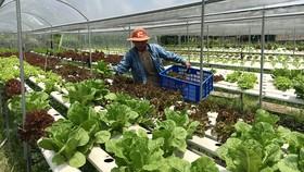 Nhờ phủ lưới điện rộng khắp nên nông dân Bình Chánh đã ứng dụng công nghệ cao  vào sản xuất nông nghiệp