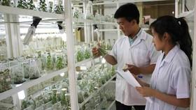 Công nghệ ươm giống trong phòng thí nghiệm, phần nào giải quyết được vấn đề giống cây trồng trên địa bàn tỉnh Lâm Đồng