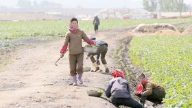 LHQ xem xét gỡ bỏ rào cản viện trợ nhân đạo cho Triều Tiên