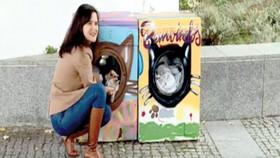 Biến máy giặt thành nhà cho mèo hoang