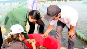 Quảng Ngãi: Giải quyết ô nhiễm môi trường bằng nuôi hải sâm ghép