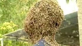 Kỷ lục cho 60.000 con ong bu kín mặt