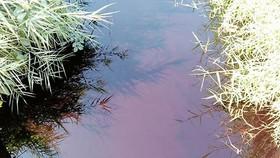 Nước thải từ khu tiểu thủ công nghiệp Lê Minh Xuân không qua xử lý, đổ thẳng vào môi trường, gây ô nhiễm nguồn nước