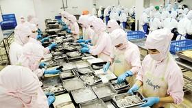 Chế biến tôm xuất khẩu tại TPHCM. Ảnh: Cao Thăng