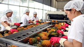 Vegetable & fruit exports remain a year on year hike