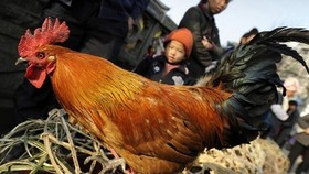 Philippines confirms avian influenza strain on Luzon island