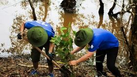 Volunteers join in the reforestation activities in Lang Sen -Photo: WWF