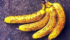 Nấm ở chuối có thể gây thiệt hại 10 tỷ USD