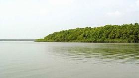 Thả tôm càng xanh giống vào sông Lòng Tàu