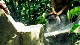 Vụ sai phạm tại Ban Quản lý rừng phòng hộ Bắc Biển Hồ: Khởi tố thêm 3 bị can