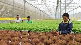 """Nông nghiệp là """"bệ đỡ"""" của khu vực ASEAN"""