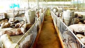 Cargill khánh thành nhà máy thức ăn chăn nuôi thứ 12