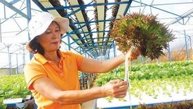 Nông nghiệp bền vững phải gắn với khoa học công nghệ