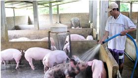 Cần truy trách nhiệm trong giải cứu nông sản