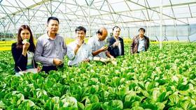 Nông nghiệp công nghệ cao: Doanh nghiệp nhỏ còn lẻ loi