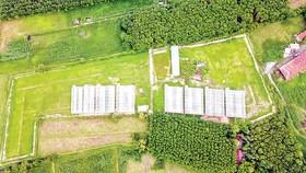 Mô hình dưa lưới trong nhà màng của Công ty Vuông Tròn, một trong số ít DN khởi nghiệp thành công. Ảnh: T. DUNG