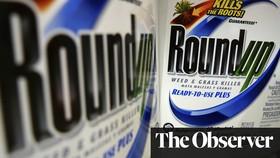 Thành phần glyphosate có trong thuốc diệt cỏ Roundup được tìm thấy trong bánh mì bán tại Anh (Ảnh : The Guardian)