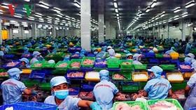 DOC kết luận sơ bộ rà soát thuế chống bán phá giá cá tra-basa Việt Nam