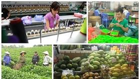 Sẽ xóa bỏ 99% thuế quan hàng hóa giao thương Việt Nam - EU