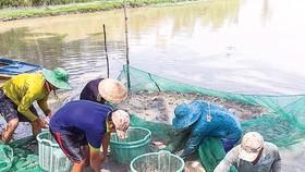 Mùa cá ra sông
