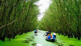 Vẻ đẹp tuyệt tác của rừng tràm Trà Sư  (Nguồn ảnh Internet)